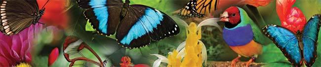 Mariposas mariposario Benalmadena