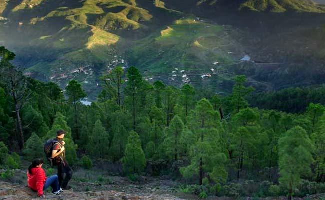 Bosque y pinar de Tamadaba, Gran Canaria
