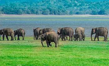 Safari por Botsuana