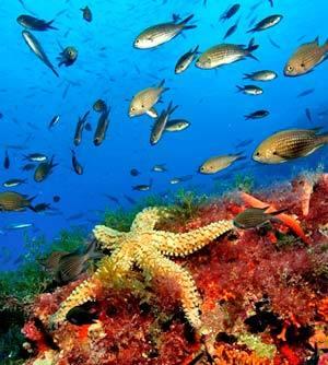 Submarinismo en Formentera