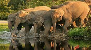 Elefantes en el lago Periyar