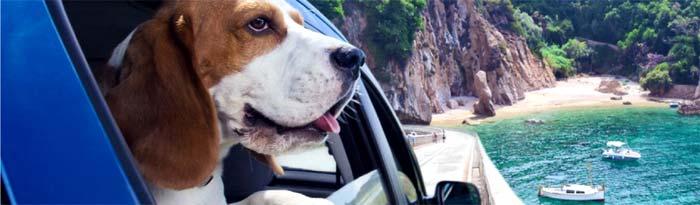 Cómo viajar con tu perro en coche
