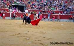 Toros Sanjuan Soria